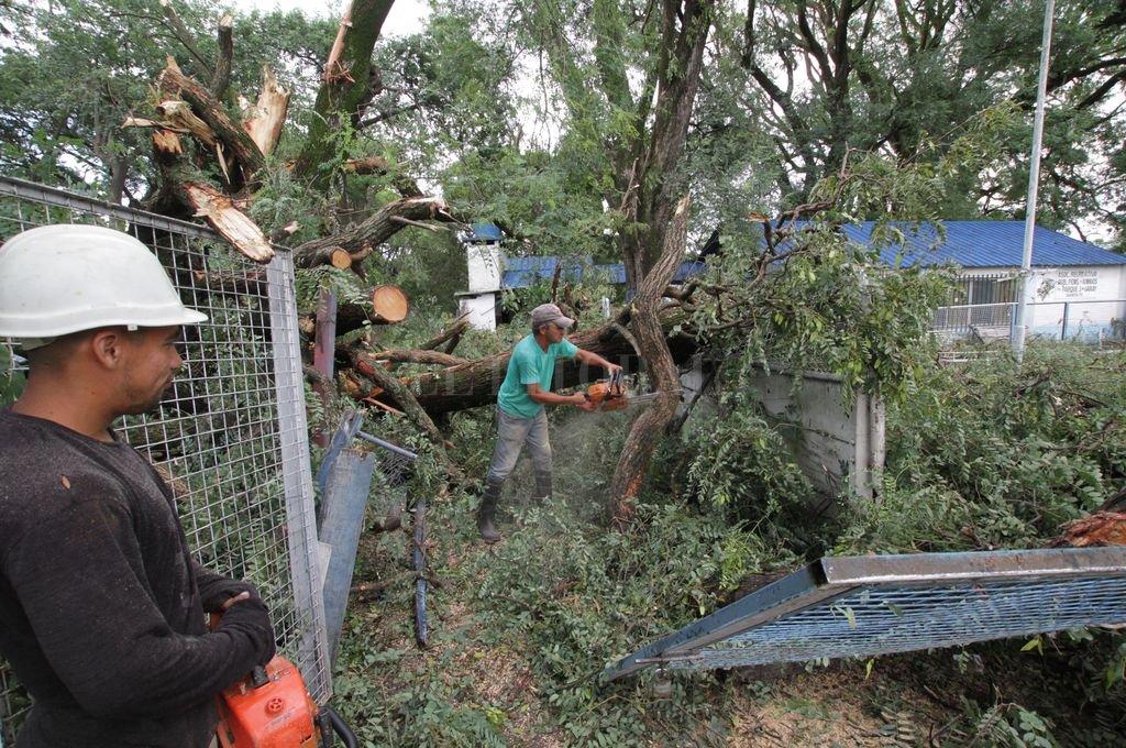 Durante los últimos años, las intervenciones ante las tormentas de viento demandaron una mayor cantidad de recursos que las situaciones producidas por lluvia.  <strong>Foto:</strong> Mauricio Garín