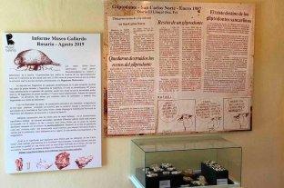 Luego de 32 años en el olvido, el dinosaurio de San Carlos Norte llegó al museo