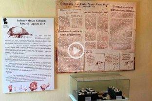 """Luego de 32 años en el olvido, el dinosaurio de San Carlos Norte llegó al museo - El ejemplar pertenece a la familia de los gliptodontes más chicos. Son parientes lejanos de los """"mulitas"""", """"peludos"""" o también denominados """"Tatu carreta"""" y se sabe que desaparecieron hace aproximadamente 8.000 años. -"""