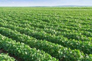 Es líder mundial en insumos para el agro, logró la máxima calificación ambiental y va por más