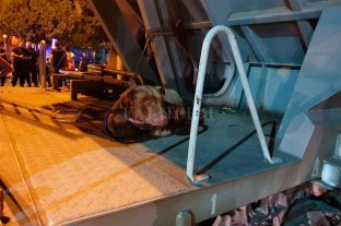 Rescataron a un perro que viajaba atado en un tren que descarriló -  -