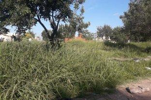 Yuyos altos y basura acumulada en Scarafía
