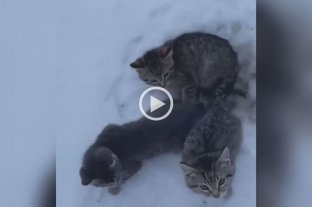 Video: Salvó a tres gatitos de morir congelados