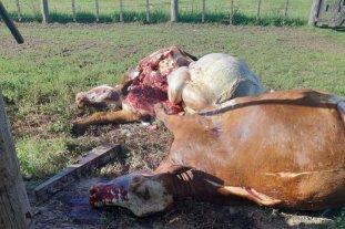 Cuatrerismo suburbano crónico: los ganaderos se armaron y patrullan los campos -  -