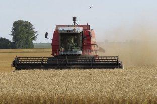 Argentina lograría la segunda mayor cosecha de su historia -  -