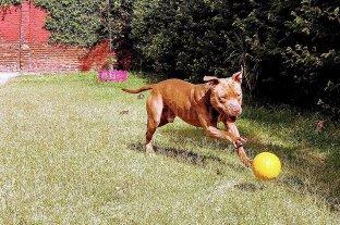 Bruno, el perro abandonado en un tren, se recupera del maltrato -