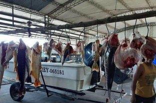 """Citan a declarar a un """"depredador"""" de surubíes en Corrientes"""