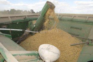 La zona núcleo podría producir hasta 22 millones de toneladas de soja