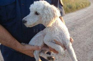 Secuestraron un perro, amenazaron con matarlo y pedían rescate: están detenidos