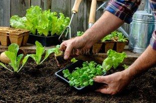 Manos a la tierra: buscan que las quintas produzcan desde una filosofía ecológica