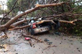 Fuerte temporal en San Luis causó anegamiento de calles y árboles caídos
