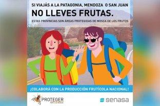 Piden no viajar con frutas a la Patagonia, San Juan o Mendoza para prevenir plaga