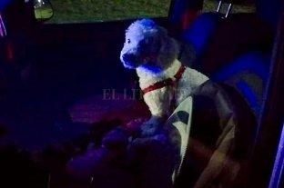 Dejó encerrado al perro en el auto para ir al casino