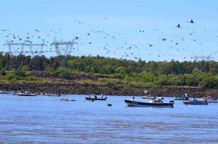 Concordia se prepara para la Fiesta Nacional de la Pesca de la Boga