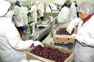 Trabas a la exportación de cerezas argentinas a China por el coronavirus