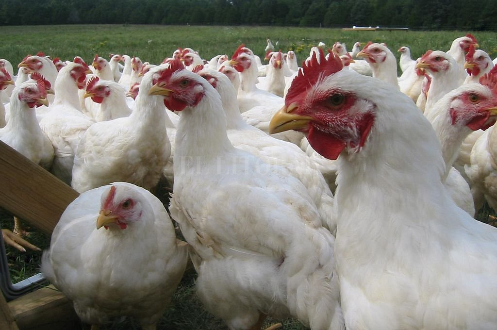 La menor brecha fue del 2,29 en la carne de pollo. Crédito: Archivo El Litoral
