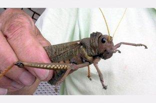 """Senanda emitió un alerta por una plaga de un insecto """"caníbal"""" en la Patagonia"""