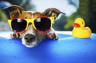 Los perros y la pileta: algunas recomendaciones para pasarla mejor