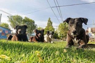 La Municipalidad de Neuquén multó a dueños de siete perros por dejarlos sueltos en la calle