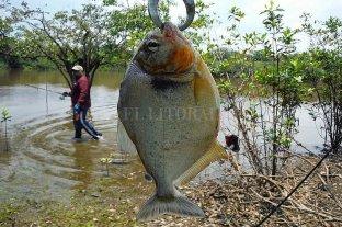 Misiones ya organiza su edición anual del Campeonato Internacional de Pesca de Pirañas