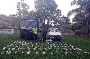 Secuestran 82 cueros de yacaré trasladados en el baúl de un auto
