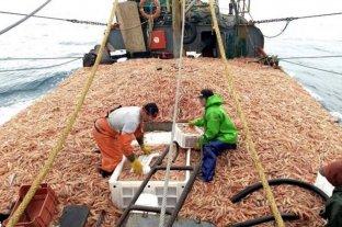 Denuncian trabajo esclavo, depredación y descarte del recurso en la provincia de Chubut