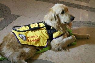 """Campaña solidaria: """"Un perro guía para Maga"""""""