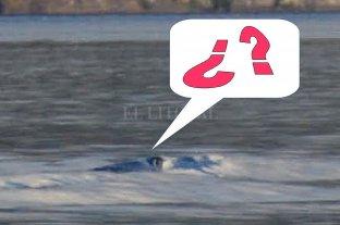 ¿Es auténtica la foto de la criatura del lago Nahuel Huapi?