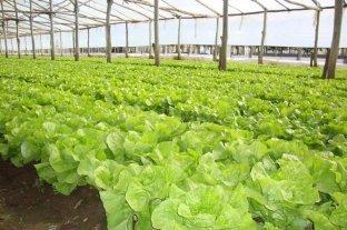 Pautas para conservar la calidad de las hortalizas