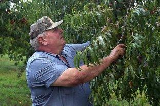 Bayer y BASF condenados a pagar 265 millones de dólares a un agricultor