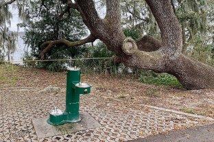 """Florida: cierran parte de un parque debido a su """"orgía anual de serpientes"""""""