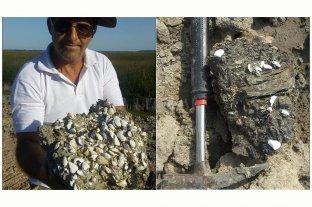 Hallaron restos fósiles marinos a orillas del Río Paraná
