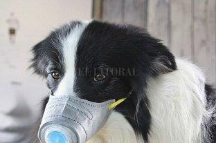 ¿El coronavirus puede afectar a las mascotas?