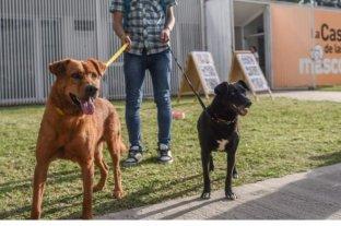 Campaña de castración gratuita de animales en Santa Fe: mirá el cronograma -