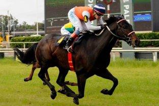 Barón Blue tiene chances concretas de ganar el Clásico Jockey Club Argentino