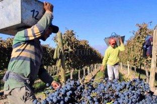 La Rioja: ofrecen 3000 puestos en la cosecha, pero solo consultaron tres interesados