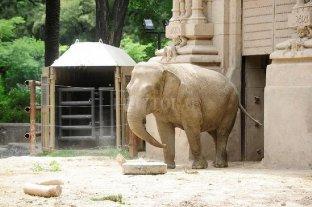 La elefanta Mara comienza la cuarentena previa a su traslado