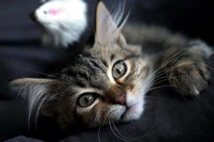 Este jueves se celebra el Día Internacional del gato -