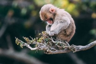 La pérdida de biodiversidad, en niveles sin precedentes -  -