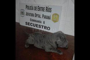 Rescataron a un perro que había sido robado en Paraná