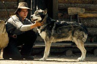"""Recuperar el instinto  - Ethan Hawke en """"Colmillo blanco"""" (1991).  -"""