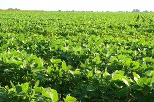 Avanza la soja de primera con expectativas de batir récords en la región