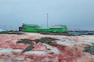 ¿Qué ha causado que la nieve se vuelva rosa en la Antártida?