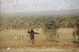 África Oriental enfrenta una plaga de langostas