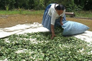 Récord de cultivo de coca y elaboración de cocaína en Latinoamérica