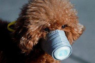 Detectan el primer caso de coronavirus en perros -  -