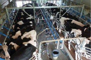 El consumo de leche cayó 25% en los últimos cinco años, según un informe - 170 litros per cápita al año es el actual promedio de consumo. El nivel más bajo desde 2003.   -