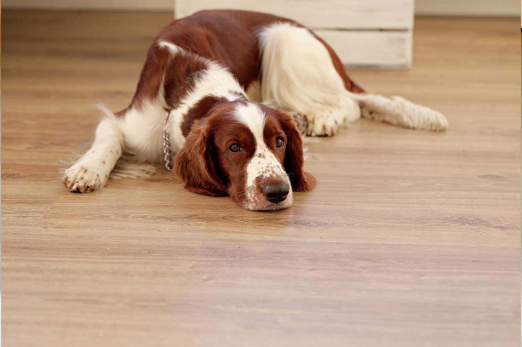 Lavandina en mano. El protocolo difundido por Ambiente aclara que el dueño de la mascota deberá limpiar la orina. Crédito: Freepik.