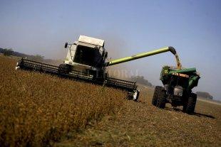 Crisis mundial: ¿una oportunidad para la producción de alimentos?