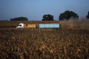 Logística de granos: cae un 5,1% el movimiento de camiones